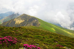 有雾的山土坎风景,在山顶部的风景看法 免版税库存图片