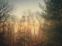 有雾的山早晨 免版税库存图片