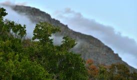 有雾的山看法  免版税图库摄影