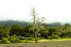 有雾的山雨林坦桑尼亚 免版税图库摄影