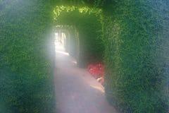 有雾的庭院 免版税库存照片