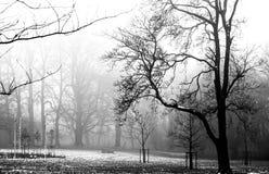 有雾的日 免版税图库摄影