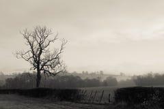 有雾的日 库存图片