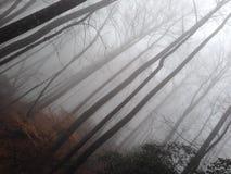 有雾的日 图库摄影