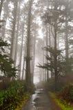 有雾的早晨俄勒冈 免版税库存照片