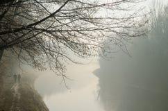 有雾的早晨公园 免版税库存照片