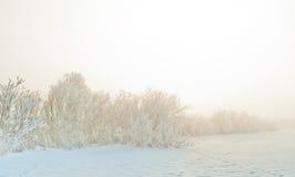 有雾的早晨冬天 日出时间 图库摄影