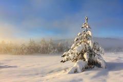 有雾的早晨冬天 库存照片