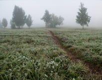 有雾的早晨和农村路 风景 库存照片