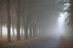 有雾的早晨在城市公园 免版税库存图片
