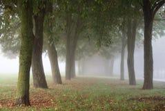 有雾的早晨在城市公园 免版税库存照片