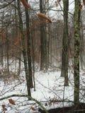 有雾的早晨在森林 库存图片