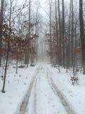 有雾的早晨在森林 免版税库存照片