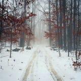 有雾的早晨在森林 免版税库存图片