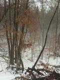 有雾的早晨在森林 库存照片