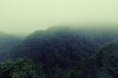 有雾的早晨在雨林里 免版税库存照片