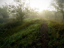 有雾的早晨自然痕迹 免版税库存图片