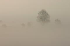 有雾的早晨 库存照片
