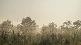 有雾的早晨Timelapse在亚热带草原 股票视频
