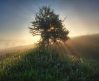 有雾的春天早晨 免版税库存图片