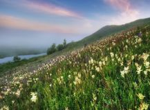 有雾的春天早晨 免版税库存照片