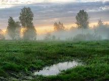 有雾的春天早晨 库存照片