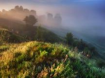 有雾的春天早晨 库存图片