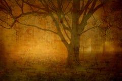 有雾的晚上 免版税库存图片