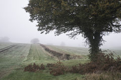 有雾的有薄雾的秋天早晨风景在英国乡下 免版税库存照片