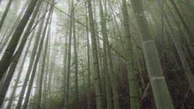 有雾的有薄雾的竹绿色森林在远足区域,瑞泰历史的足迹的阿里山在台湾 股票录像