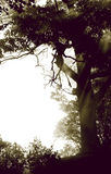 有雾的木头 库存照片