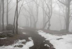 有雾的木头 免版税库存图片