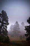 有雾的杉树风景 免版税图库摄影