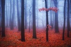 有雾的树在有红色叶子的森林里 免版税图库摄影