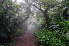 有雾的树在Mombacho云彩森林里 免版税库存照片