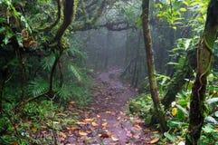 有雾的树在Mombacho云彩森林里 库存照片
