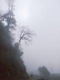 有雾的树,不丹 库存图片