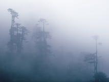 有雾的树,不丹 图库摄影