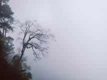 有雾的树,不丹 库存照片