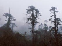 有雾的树,不丹 免版税库存图片