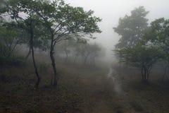 有雾的森林公路在印度期间的季风 库存图片