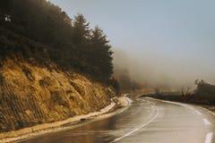 有雾的森林公路在阿尔及利亚 免版税库存图片