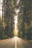 有雾的森林公路旅行 库存照片