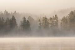 有雾的森林和湖在黎明 免版税库存照片