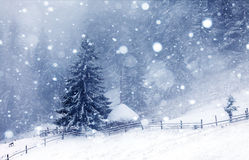 有雾的森林在冬天 免版税库存照片