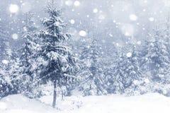 有雾的森林在冬天 库存照片