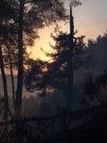 有雾的森林在日落 库存图片