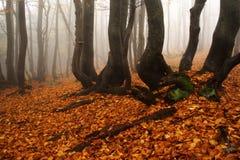 有雾的森林巨人山 免版税库存照片