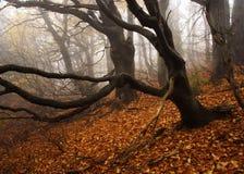 有雾的森林巨人山 免版税库存图片