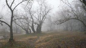 有雾的森林或公园秋天风景全景 影视素材